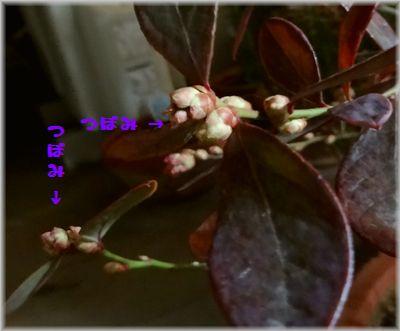 DSC00085(補).jpg