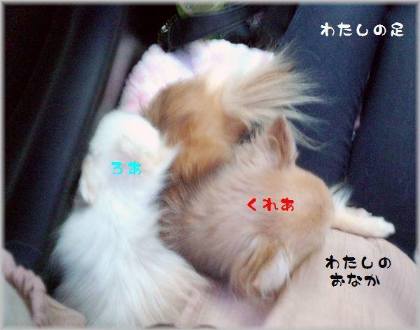 DSC_0997(補).jpg