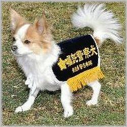 警察犬チワワ(補).jpg