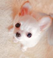IMG_9606-thumbnail2.jpg