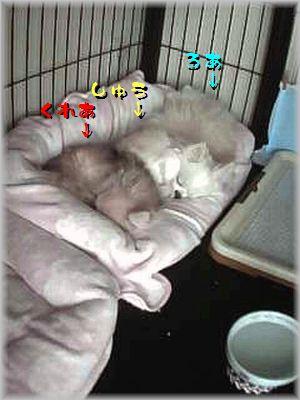2014-02-14_14_09(補).jpg