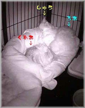 2014-02-14_15_54(補).jpg