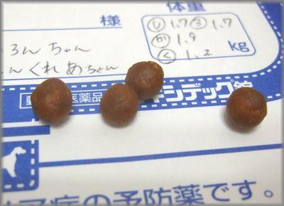 DSCF0332(補2).jpg
