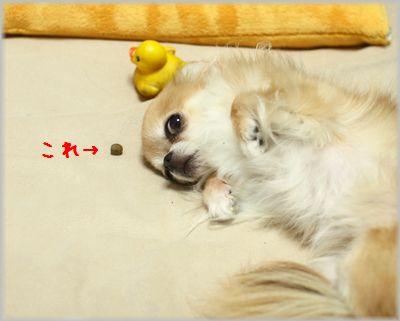 IMG_3698(補4).jpg