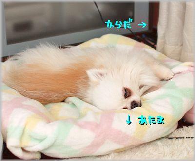 IMG_3958(補4).jpg