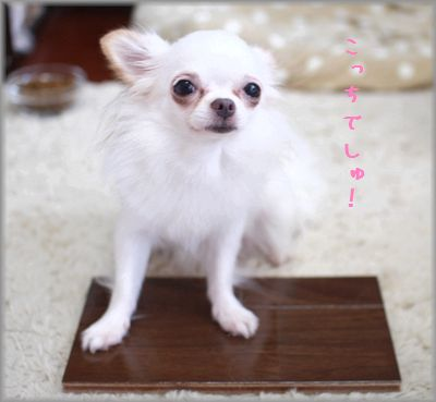 IMG_7621(補2).jpg