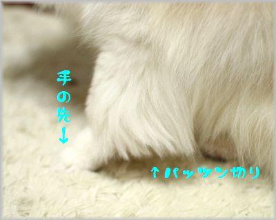 IMG_8786(補3).jpg