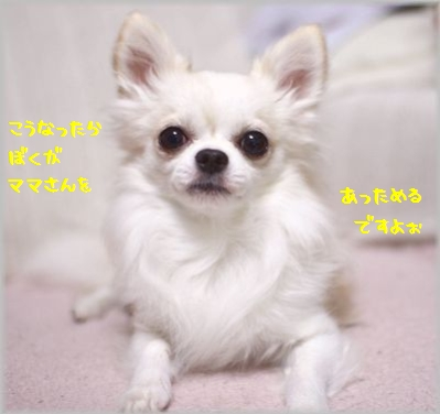 IMG_8835(補).jpg