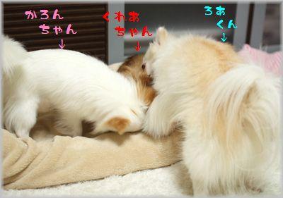 IMG_9678(補3).jpg